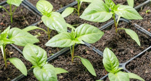 LED Plante vækstlys