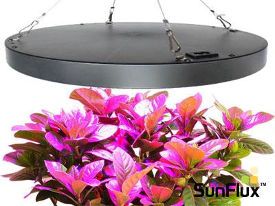 Vækstlys – Grønne planter med LED lys